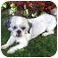 Photo 3 - Shih Tzu Dog for adoption in Los Angeles, California - HOOPER
