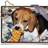 Adopt A Pet :: Riley - Portland, OR