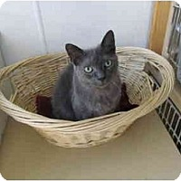 Adopt A Pet :: Smokey II - Pascoag, RI