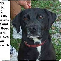 Adopt A Pet :: # 389-10 - ADOPTED! - Zanesville, OH