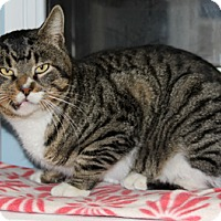 Adopt A Pet :: Christian - Harrison, NY