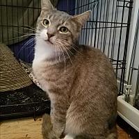 Adopt A Pet :: Moses - Greensburg, PA