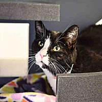 Adopt A Pet :: ELVIRA - Murray, UT