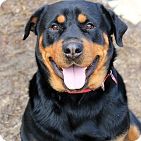 Adopt A Pet :: Sophia - Frederick, PA