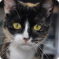 Adopt A Pet :: Kara - Wayne, NJ