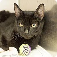 Adopt A Pet :: Blaire - Richmond, VA