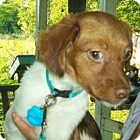 Adopt A Pet :: Pip - Norris City, IL
