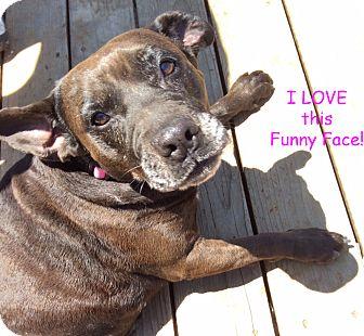 Terrier (Unknown Type, Medium)/Labrador Retriever Mix Dog for adoption in Poway, California - Henrietta