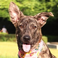 Adopt A Pet :: Fiona - San Francisco, CA