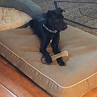 Adopt A Pet :: Billy - East Randolph, VT