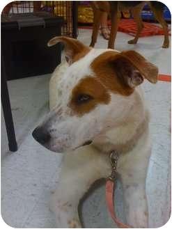 Shepherd (Unknown Type) Mix Dog for adoption in Carrollton, Georgia - Ginger