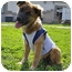 Photo 2 - Chow Chow Mix Puppy for adoption in Corpus Christi, Texas - Brownie