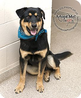 Rottweiler Mix Dog for adoption in Troy, Ohio - Rowdy