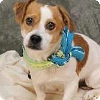 Adopt A Pet :: Jasper - Hastings, NY