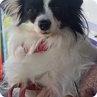 Adopt A Pet :: Bonita - Fort Lauderdale, FL