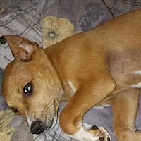Adopt A Pet :: Elway - Loganville, GA