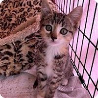 Adopt A Pet :: ELLIE - Brea, CA