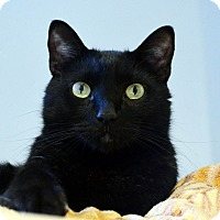 Adopt A Pet :: Buddha - Lincoln, NE