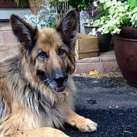 Adopt A Pet :: Champ - Denver, CO