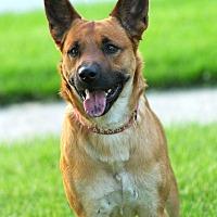 Adopt A Pet :: Leo - Lafayette, IN