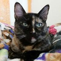 Adopt A Pet :: Gwynneth Pawtrow - Mountain Center, CA