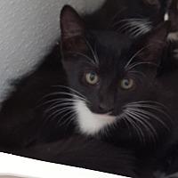 Adopt A Pet :: Zale - Tombstone, AZ