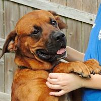 Adopt A Pet :: Dante - Joplin, MO