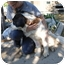 Photo 4 - St. Bernard Puppy for adoption in Bellflower, California - Mastadon