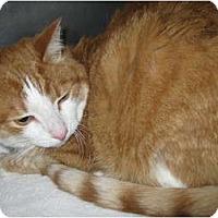 Adopt A Pet :: Buddy - Warminster, PA