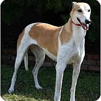 Adopt A Pet :: Robyn - Carlsbad, CA