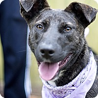 Adopt A Pet :: Rapunzel - Houston, TX