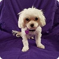 Adopt A Pet :: RASCAL - Covina, CA