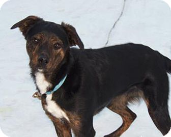 English Shepherd/Terrier (Unknown Type, Medium) Mix Dog for adoption in Owatonna, Minnesota - Chance