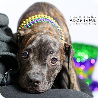 Terrier (Unknown Type, Medium) Mix Puppy for adoption in Edwardsville, Illinois - Perro