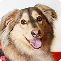 Adopt A Pet :: Summit - Eugene, OR
