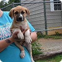 Adopt A Pet :: JAX - South Dennis, MA