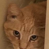 Adopt A Pet :: Prince - Waggaman, LA