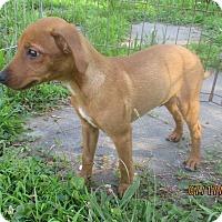 Adopt A Pet :: Harjo - West Warwick, RI