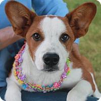 Adopt A Pet :: Daphne - Garfield Heights, OH