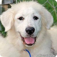 Adopt A Pet :: Meme - new pup! - Beacon, NY