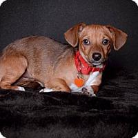 Adopt A Pet :: Hudson - Van Nuys, CA