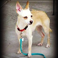 Adopt A Pet :: Rosetta - Tijeras, NM