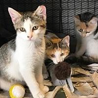Adopt A Pet :: Hope & Jack - Marlton, NJ