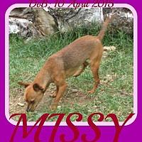 Adopt A Pet :: MISSY - Sebec, ME