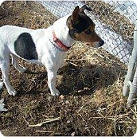 Adopt A Pet :: Jimmy - Omaha, NE