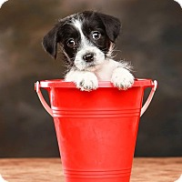 Adopt A Pet :: *Chewy - PENDING - Westport, CT