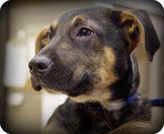 Dachshund/Hound (Unknown Type) Mix Puppy for adoption in Shelter Island, New York - Milk Dud
