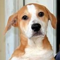 Adopt A Pet :: Crystal - Jackson, MS