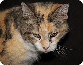 Calico Cat for adoption in Marietta, Ohio - Marbles (Spayed)