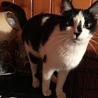 Adopt A Pet :: August - Sedalia, MO